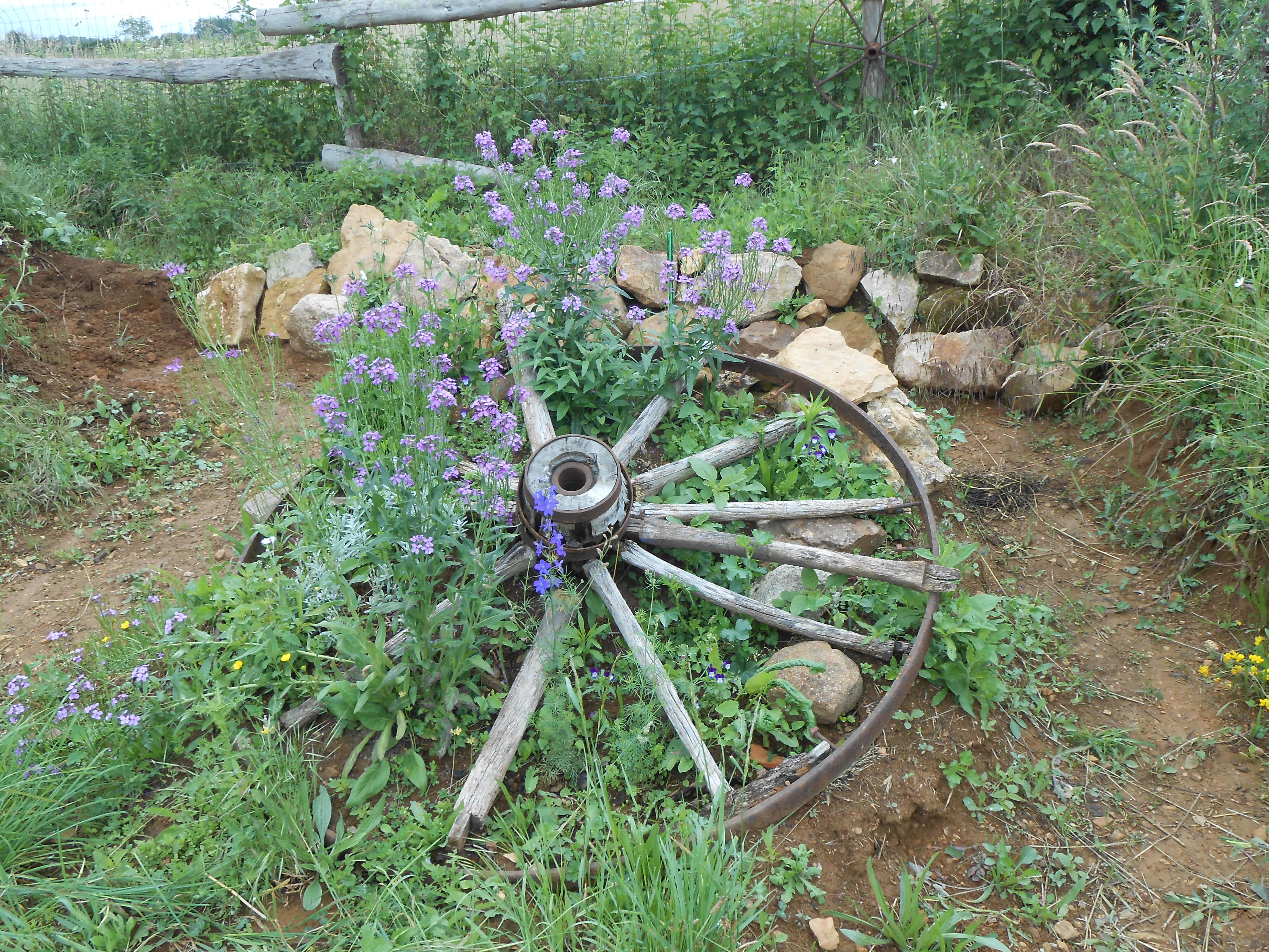 Plantations autour de la roue au fond du terrain