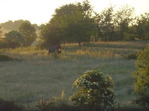 Jument et son poulain vus depuis la fenêtre du gite